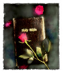 Holy Bible and Roses